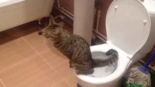 Cat. cat and toilet