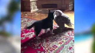 Funny cute little animals