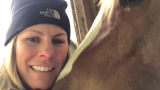 Happy Horse Nuzzles Owner