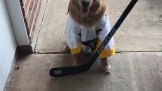 Sports-loving dog dresses as hockey player for Halloween - Video