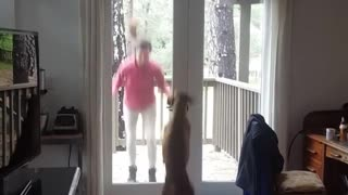 Brown dog jumps up and down with girl in doorway - Video
