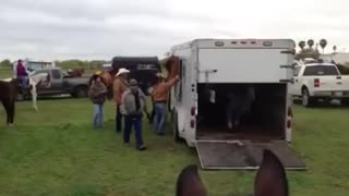 Trailer Windows Are Dangerous For Your Horse - Video