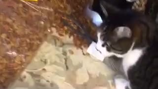 Brown cat eating cat food on table - Video