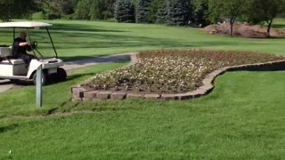 Golf Cart Jumps Over Flower Bed - Video