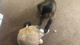 Monkey hates tortoise statue, hits it on head with hammer - Video