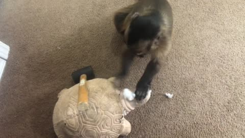 Monkey hates tortoise statue, hits it on head with hammer
