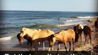 """Wild Horse Beach""-Heaven For Every Horse Lover - Video"