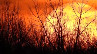 Treeline Sunset in Orange  - Video