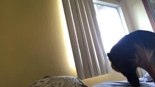 Puppy wakes mom up  - Video