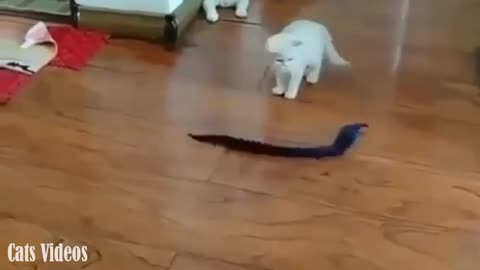 A cat Afraid of a Snake Game