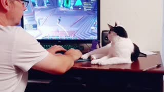 Bo Daisy watching World of Warcraft