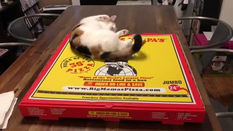 This kitty is the cutest pizza topping ever!