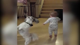 Baby and puppy twirl adorably for treats - Video