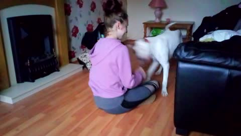 CUTE BIG DOG DECIDES TO SWEEP THE FLOOR WITH HIS OWNER!