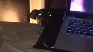Dog stares at owner from behind laptop