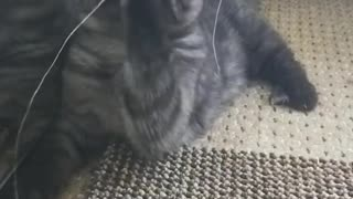Slow Motion Caty Playing
