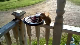 It's a squirrel - eating cake - Video