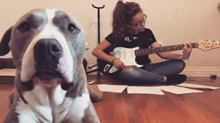 Jealous pit bull demands attention from her owner