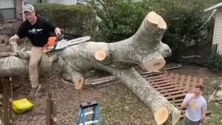 Tree Stands Upright After Chainsaw Cut