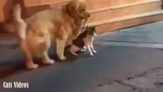 A cat is Trying to Attack Another cat But The Dog intervenes at The last Minute