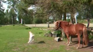 Baby horse and Big horse - Video