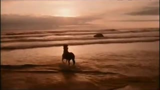 Black stallion gallops across beach in moment of pure equine beauty - Video