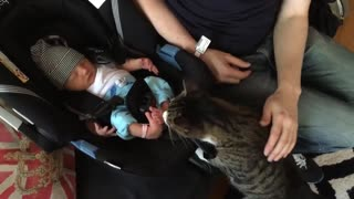 Cats Meeting new born Babies