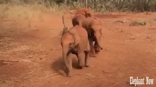 Elephants run very fast.