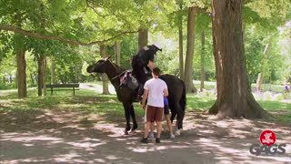 Cop Goes Horse Riding Backwards! - Video