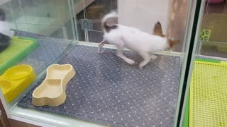 Puppy Playfully Chases Its Tail