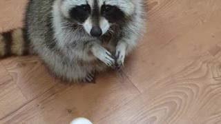 Nice catch ping pong ball  - Video