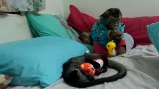 Monkey and weasel get ready for bedtime - Video