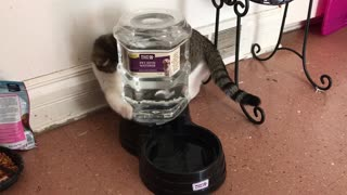 Cat playing with water - Video