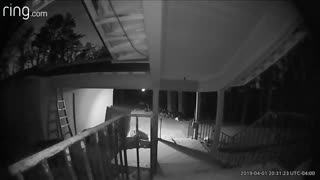 Bear Caught On Camera Stealing The Cat's Food
