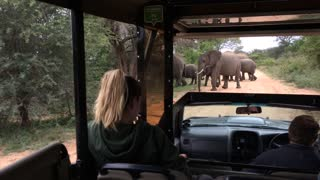 Huge herd of Elephant crossing right in front of us amazing!