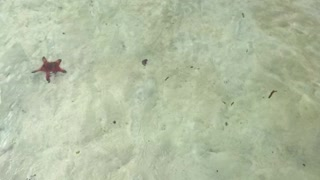 Beach with Water Stars on Phuquoc  - Video