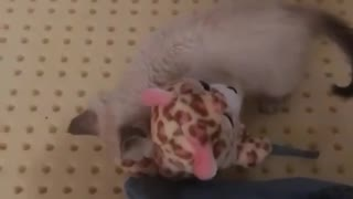 Small Kitten Playing with Her Teddy Bear Toy