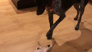 Dog Snaps After Being Stomped On