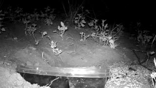 Deer with Night Vision