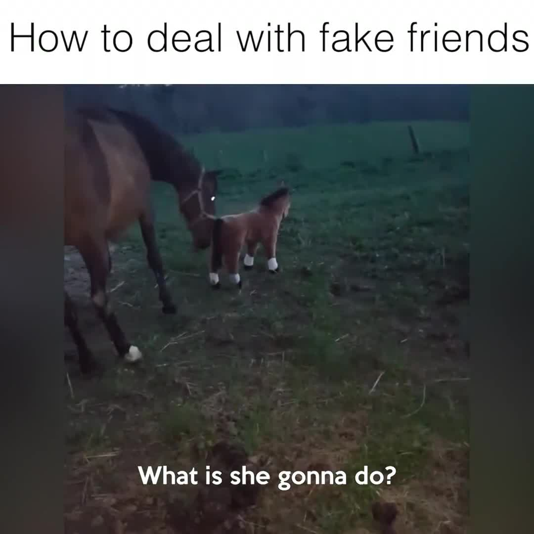 How Horses Deal With Fake Friends