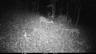 Doe Checking out what's for dinner