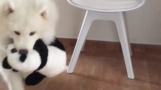 White dog grabs stuffed toy panda from chair