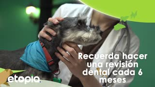 Eres responsable de la higiene dental de tu mascota - Video