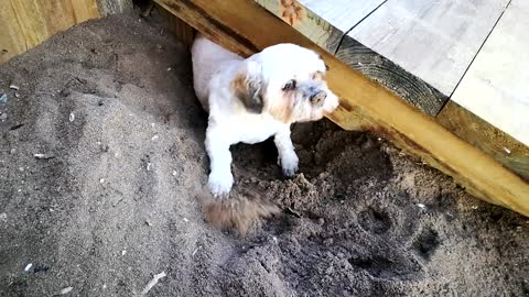 Puppy gets stuck under wooden path (cute and funny)