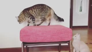 cats play in the house & funny cats