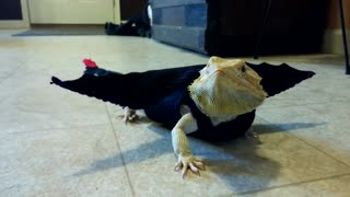 Bearded Dragon models movie-inspired dragon outfit - Video