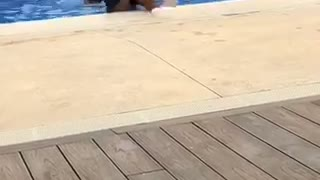 Kid tries to push friend into pool falls in with friend  - Video