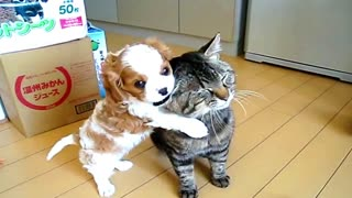 A puppy playing with a cat
