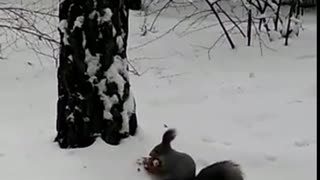 Watch this person hand feed a wild squirrel in the forest