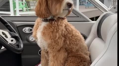 Kids ask dog to drive boat after he sits in captain's chair